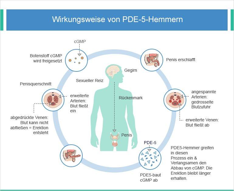 Wirkungsweise von PDE-5-Hemmern